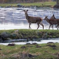 Gasthof Waldeslust 201402-am-Teich-9051-sh-200x200 Bilder - Tiere