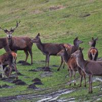 Gasthof Waldeslust 201402-reed-deer-family-9032-200x200 Bilder - Tiere