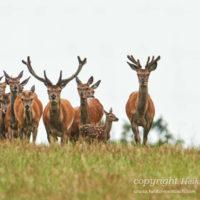 Gasthof Waldeslust 201606-herd-with-calf-1155-sh-sRGB-200x200 Bilder - Tiere