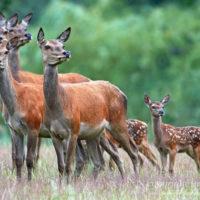 Gasthof Waldeslust 201606-herd-with-calf-1462-sh-sRGB-200x200 Bilder - Tiere