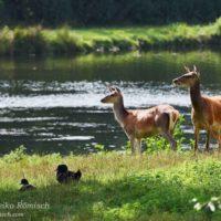 Gasthof Waldeslust Bild-1-200x200 Bilder - Tiere
