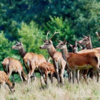 Gasthof Waldeslust Bild-2-200x200 Bilder - Tiere
