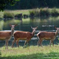 Gasthof Waldeslust Bild-3-200x200 Bilder - Tiere