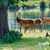 Gasthof Waldeslust Bild-4-200x200 Bilder - Tiere