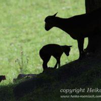 Gasthof Waldeslust Bild-6-200x200 Bilder - Tiere