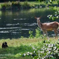 Gasthof Waldeslust Bild-7-200x200 Bilder - Tiere