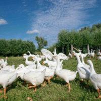 Gasthof Waldeslust tiere21-200x200 Bilder - Tiere