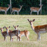 Gasthof Waldeslust tiere23-200x200 Bilder - Tiere